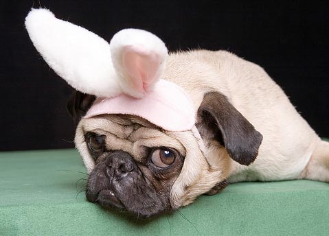 rabbit-dog-485.jpg
