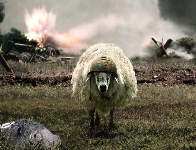 The Sheep of War 672