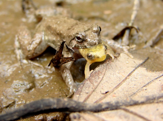Its a frog eat frog world 083