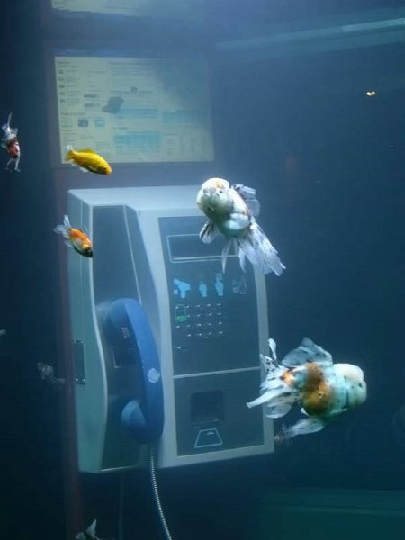 Aquarium Phonebooth 676