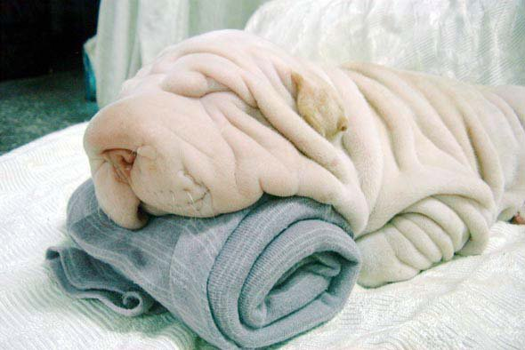 Dog Towel 276