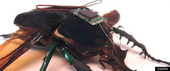 CYBORG-INSECTS