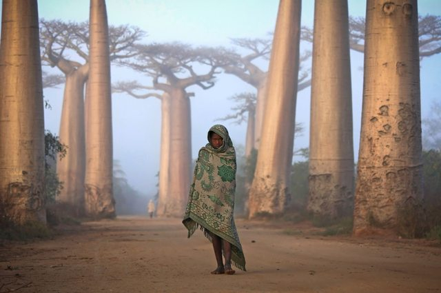Among giants in Madagascar 579