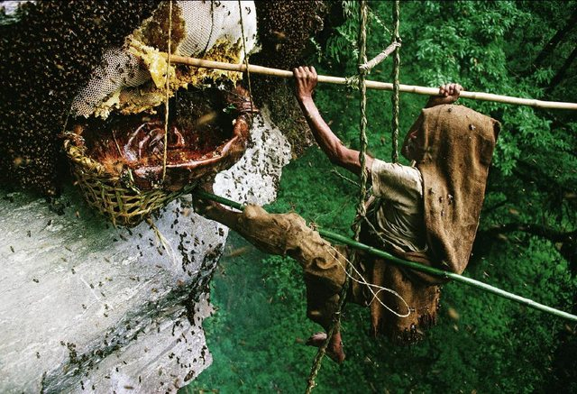 Dangerous Jobs- Honey Hunting in Nepal 506