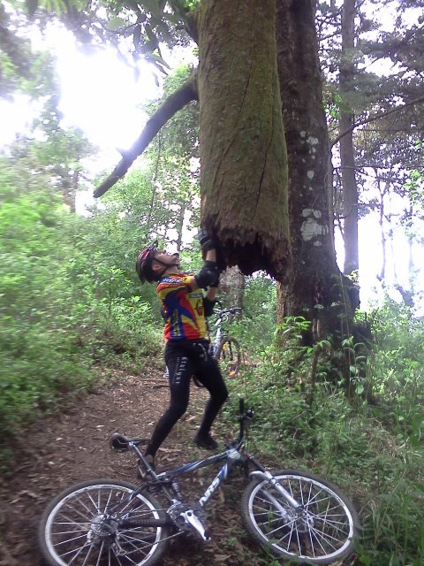 a tree was blocking our trail. He took care of it 461