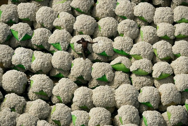 resting on bales of cotton 177