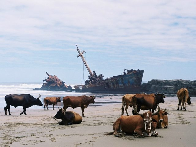 shipwreck in the Transkei, South Africa 793