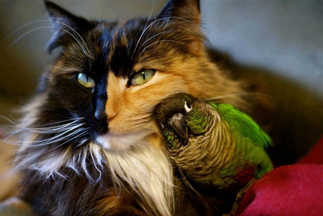 Two faced cat and bird buddy 9jqh7wr