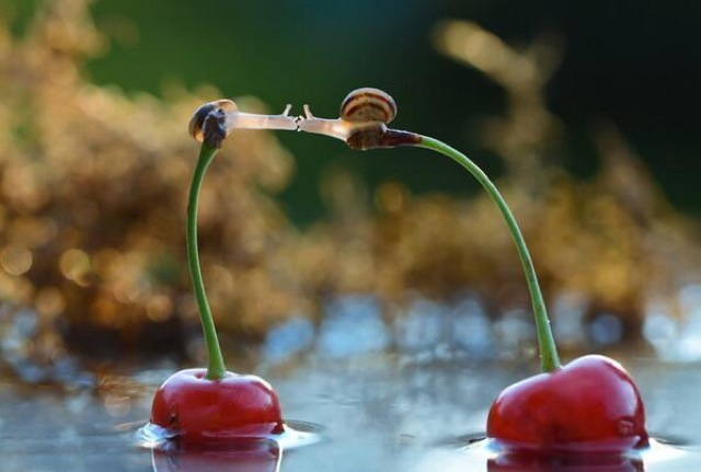 Snails kiss on cherries 9i8u