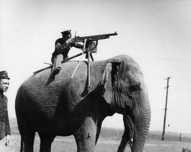 machine gun on the back of an elephant during WW1 g5h6