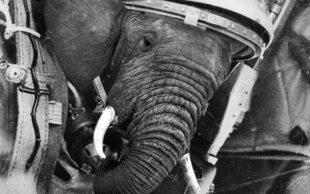 Amadeus Pike, also known as the Elephant Astronaut t63dm1
