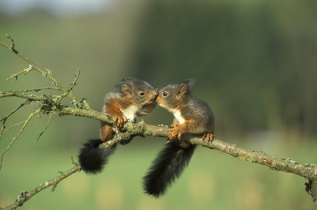 Squirrely romance i98uo0