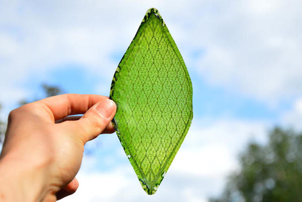 breathing leaf