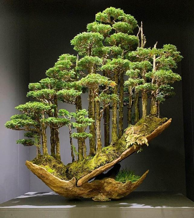 9.) This bonsai tree recently sold for ¥1,800,000 ($16,000)!
